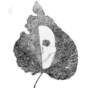 1. Dead Leaf - 300